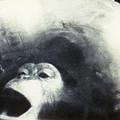 Nasa Chimpanzee, 1961 by Granger