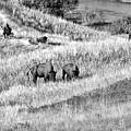 National Bison Range Wildlife Refuge Mt Usa by Christine Till