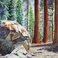 National Park Sequoia by Irina Sztukowski