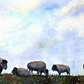 National Treasure - Bison by Marsha Karle