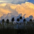 Native Florida by David Lee Thompson