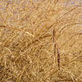 Natural Abstracts - Elaborate Shapes And Patterns In The Golden Grass by Georgia Mizuleva