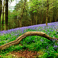 Natural Arch And Bluebells by John Edwards