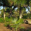 Natural Beauty Of Florida by Zal Latzkovich
