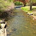 Natural Bridge  by Sarah Jane Thompson