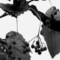 Natural Composition by Lauren Radke