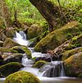 Natural Flow by John Coffey