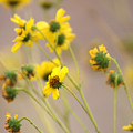 Natural Flowers by Scott Sawyer