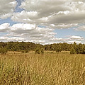 Natural Meadow Landscape Panorama. by Arletta Cwalina