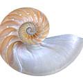 Natural Nautilus Seashell On White by Gill Billington