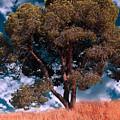 Nature - Green Tree by Munir Alawi