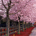 Nature - Pink Trees by Munir Alawi