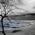 Nature - Sad Tree by Munir Alawi