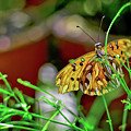 Nature - Butterfly And Plants by Carlos Alkmin