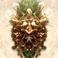 Nature by Cynthia Saliba