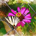 Butterfly In Love by Diana Van