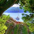 Nature Framed Boat by Lance Sheridan-Peel