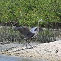Nature In Florida by Deborah Benoit