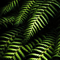Nature In Minimalism by Jorgo Photography - Wall Art Gallery