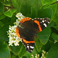 Nature In The Wild - Landing Perfectly by Lucyna A M Green