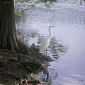 Nature In The Wild - Musings By A Lake by Lucyna A M Green