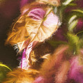 Nature Pastel Artwork by Jorgo Photography - Wall Art Gallery