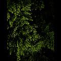 Nature Plants by Nini Pakempitan