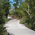Nature Trail by Gary Wonning