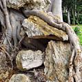 Nature Vs Man by Bruce Roker