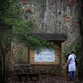 Nature Walk by Kim Henderson