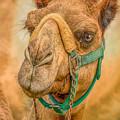 Nature Wear Camel by LeeAnn McLaneGoetz McLaneGoetzStudioLLCcom