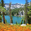 Nature's Beauty In The Sierra by Lynn Bauer