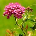 Nature's Bouquet by JoAnne Burgess
