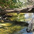 Nature's Bridge by Cindy Gacha