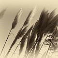 Natures Brushes by Mario Traina