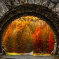 Natures Color Schemes by Susan Candelario