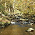 Nature's Finest 5 - Ricketts Glen by Cindy Treger