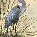 Nature's Harmony by James Williamson