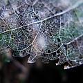 Nature's Lace by Rebecca Davis