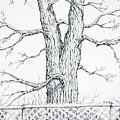 Nature's Lines by Rebecca Davis