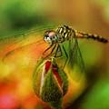 Nature's Little Creatures by Ola Allen