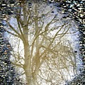 Natures Looking Glass 4 by September  Stone