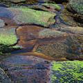 Nature's Mosaic No. 1 by Skip Willits