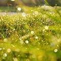 Nature's Sparkles by Nikki Watson    McInnes