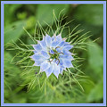 Natures Star by Wendy Wilton