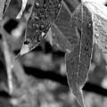 Nature's Tears by Lauren Radke