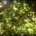 Nature's Upward View by Paul Pettingell