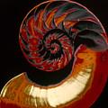 Nautilus by Granger