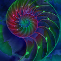 Nautilus Shell Blue Green Pink by Clare Bambers