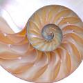Nautilus Shell by Richard Thomas